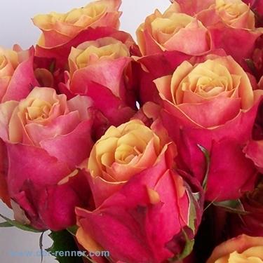 Rose Cherry Brandy In Orange 20 Stück Blumen Für Hotel