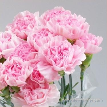 diantus edelnelken betsy rosa aus columbien blumen f r hotel dekoration hochzeiten. Black Bedroom Furniture Sets. Home Design Ideas