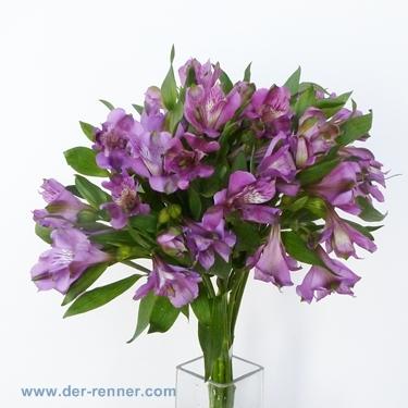 alstroemeria cartagena in lila aus holland blumen f r. Black Bedroom Furniture Sets. Home Design Ideas