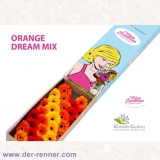 30 St. Germini Orange Dream Mix