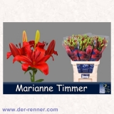 Lilie - rot - Marianne Timmer - 10 St.