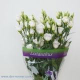 Eustoma Piccolo White VE 10 St.