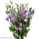Eustoma Piccolo Lavender VE 10 St.
