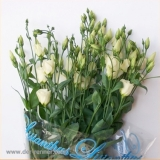 Eustoma Piccolo Yellow VE 10 St.