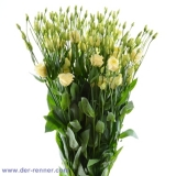 Eustoma Minuett Yellow VE 10 St.