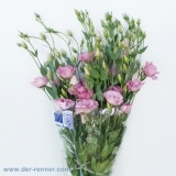Eustoma Rosita Rose VE 10 St.