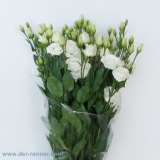 Eustoma Minuett White VE 10 St.